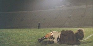 Dirty Harry Kezar Stadium