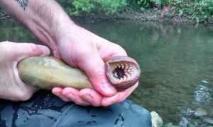 Does this lamprey look depressed to you?