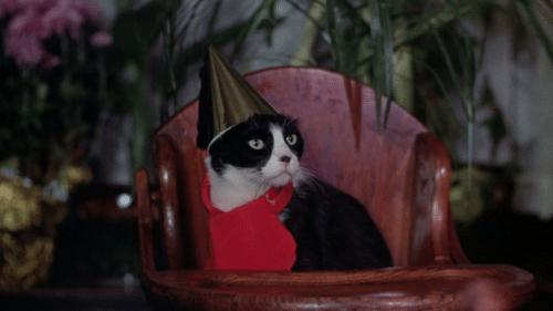 Happy birthday, Snuggles!